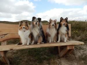 Jillz,Skoeter,Ivey,Lassie