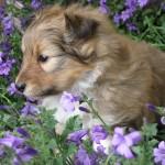 bloempjes ruiken