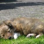 van buitenspelen krijg je slaap