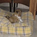 even uitrusten op het kussen van ome Lassie