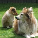 Tygo met ome Ivey samen van de zon genieten