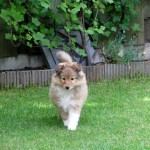 Tygo 8 weken oud