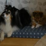 Tygo met zijn nieuwe vriend Nigel