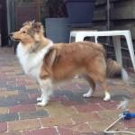 Lola 6.5 maanden