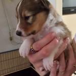 3 weken oud, teefje 1