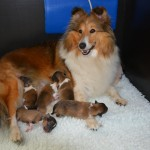 Trotse mama Jillz, pups 1 dag oud