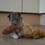 teefje 3, wat vinden jullie van mijn speeltje ?